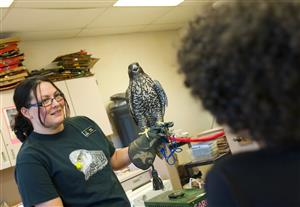 Kaila, an animal care specialist from Nature's Educators introduces RES students to a Gyrfalcon on STEM Night
