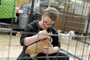 Sixth-grader Isaac George, 11, pets a rescued dog at the National Dog Mill Rescue March 11 in Peyton, Colo.