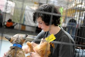Eighth-grader Zane Scott, 14, socializes with rescued dogs at the National Dog Mill Rescue March 11 in Peyton, Colo.