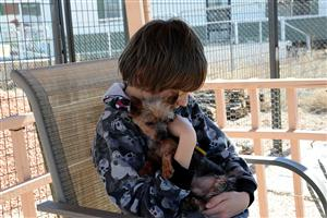 "Sixth-grader Shane Avery, 11, pets a rescued dog during a ""puppy party"" at the National Dog Mill Rescue March 11."