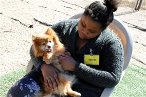 "Sixth-grader Taneya Levy, 11, pets a rescued dog during a ""puppy party"" at the National Dog Mill Rescue March 11."
