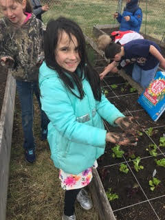 RES third grade students plant lettuce in the rain May 9.
